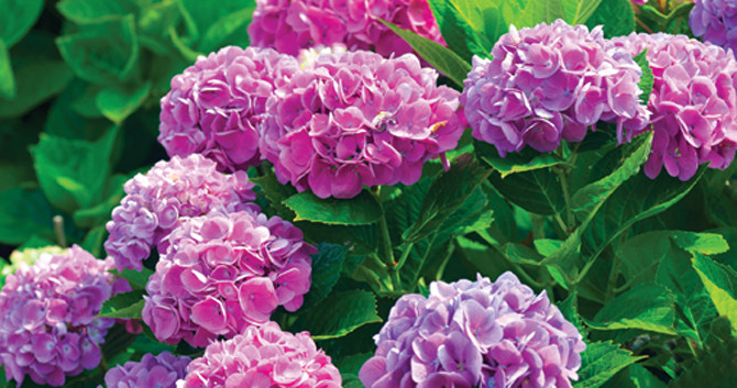 5 Flowering Shrubs for Your Buffalo Landscape