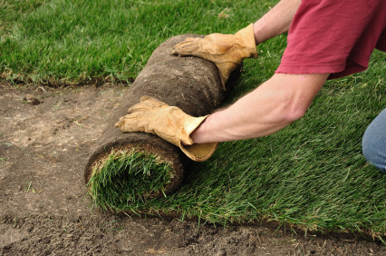 How to Care for Your New Sod